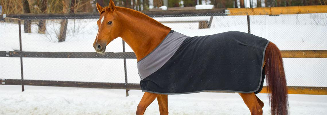 Choisir une couverture pour son cheval